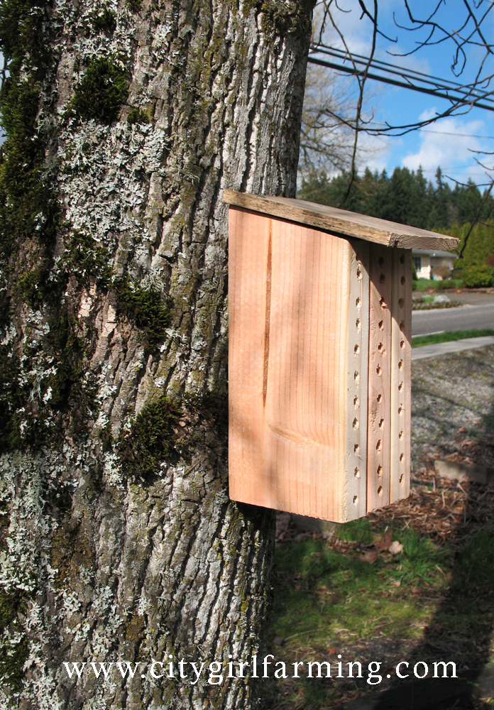 Carpenter Bee Trap With Rough Sketches Images Frompo
