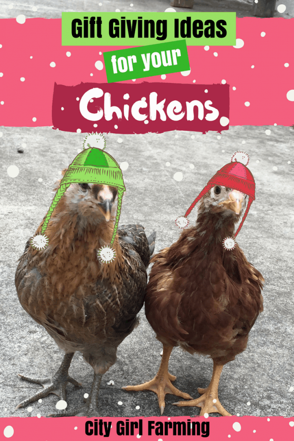 Gift Giving Ideas for Your Chickens…