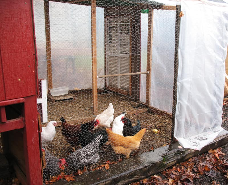 Winterizing the Chicken Run