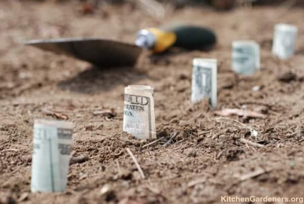 Cash Crop?