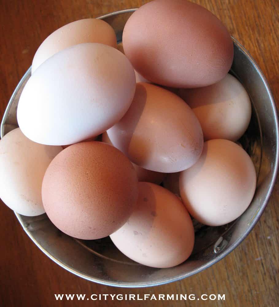 eggs-in-bucket