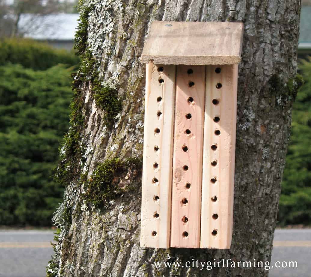 orchard mason bee house plans