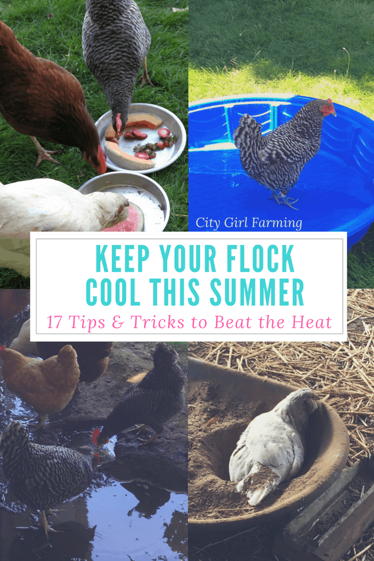 Chickens in hot weather: 17 ways to help keep your flock cool this summer