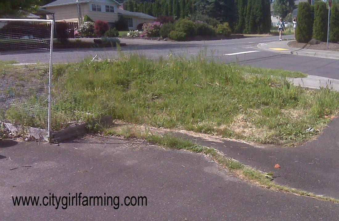 City Gardening (With a Bit of Creativity!)