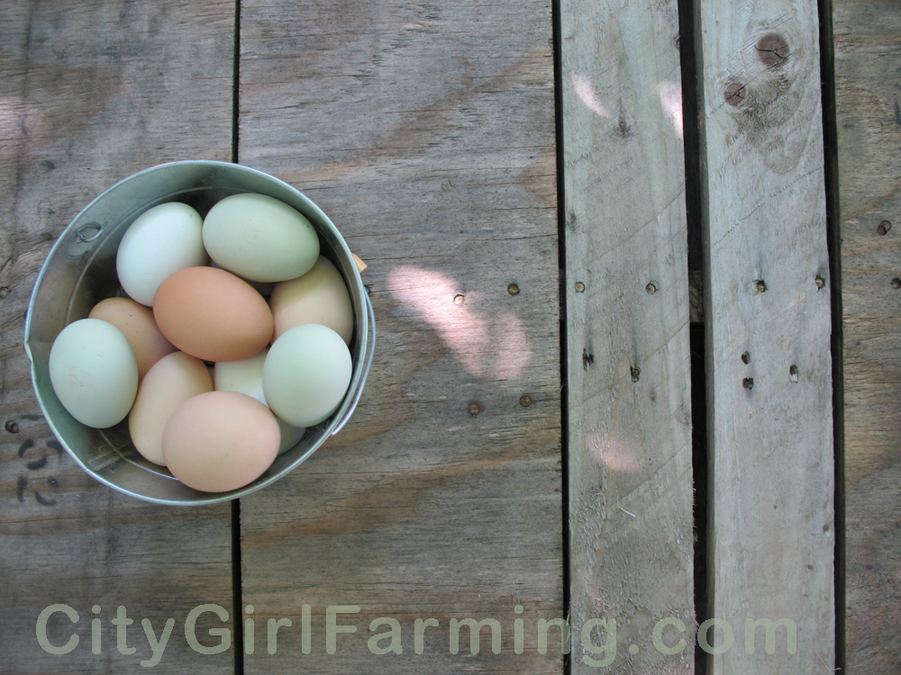 multi-colored-backyard-eggs