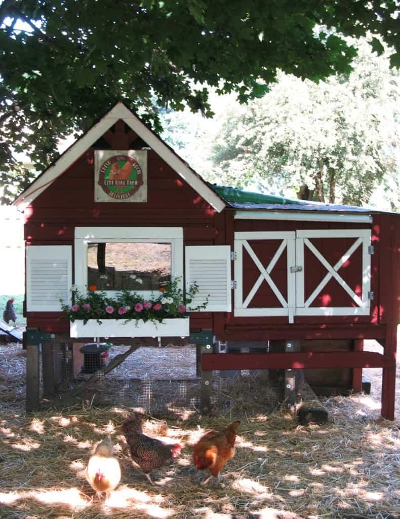 basic chicken coop