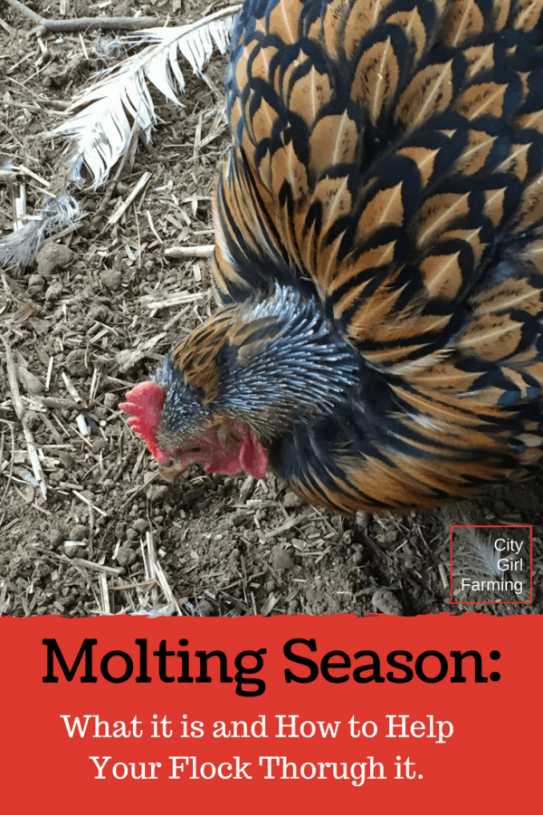 Molting is a normal part of the chicken life...but there are ways you can help your flock through it quicker!