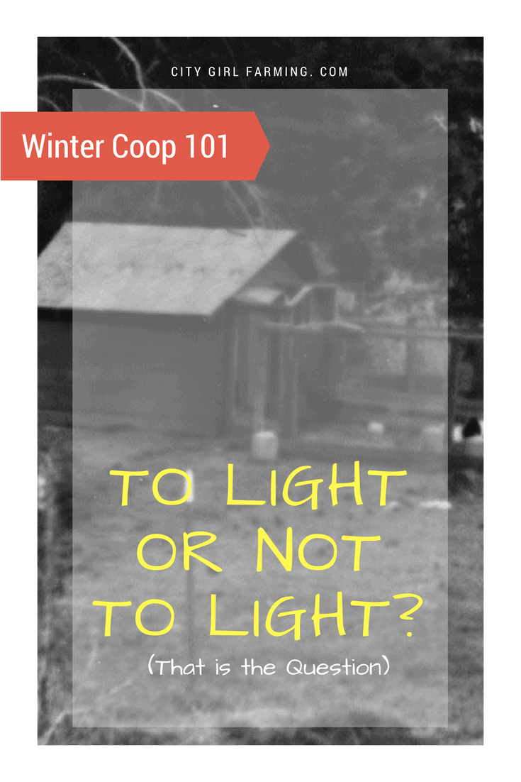 To light or not to light your coop? A common sense approach.