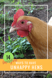 14 Surefire Ways to Have Unhappy Hens