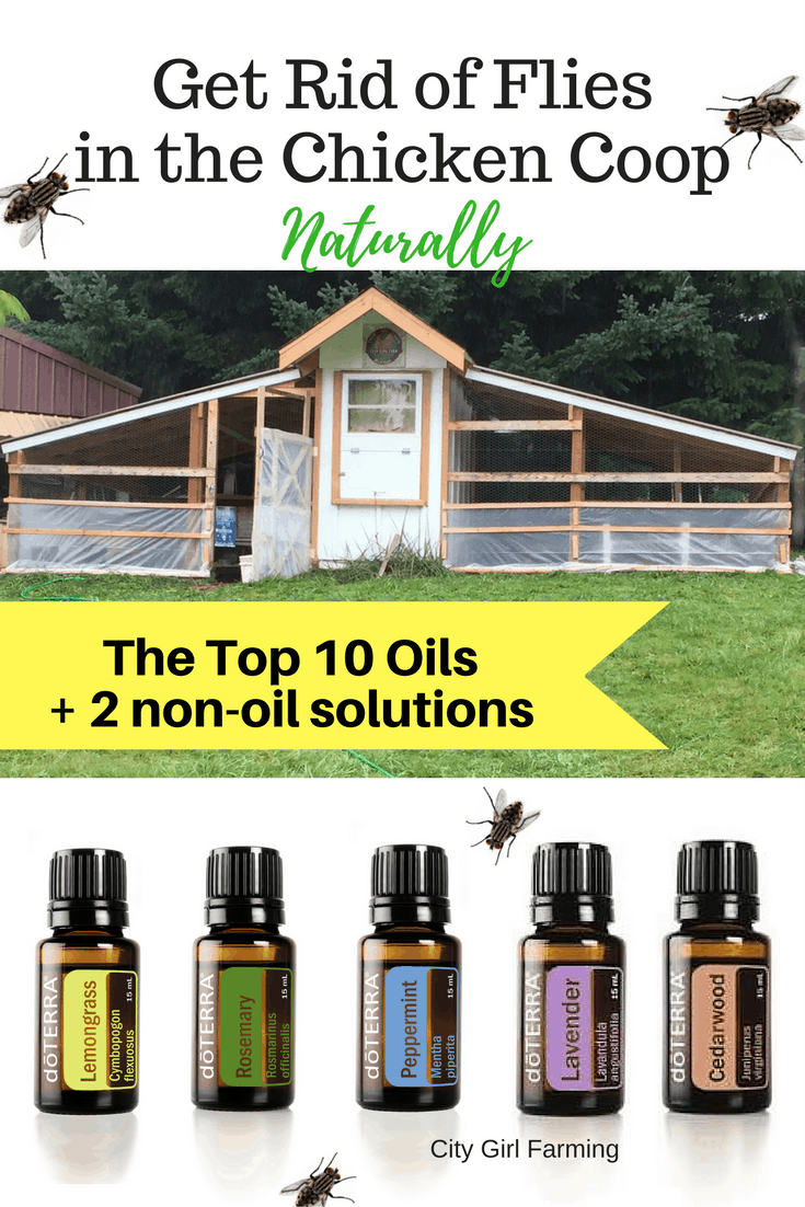 The top 10 essential oils for fly control in the chicken coop (plus two other natural fly solutions)