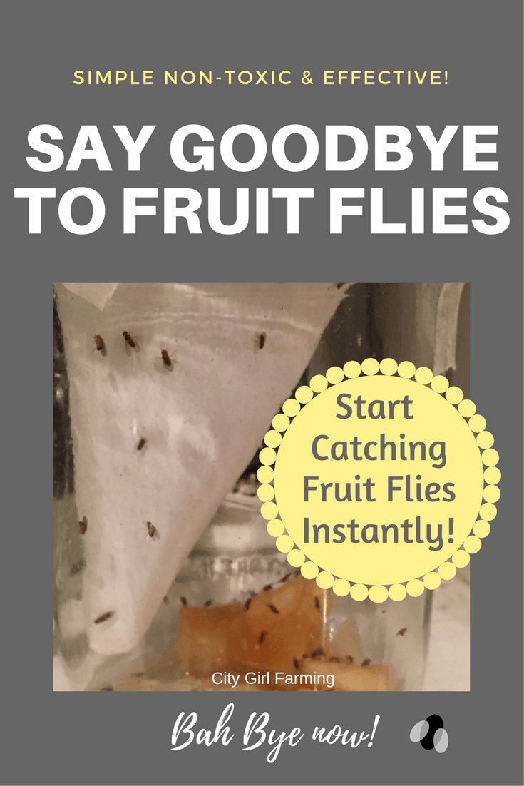 A quick, non-toxic solution to catching fruit flies that will have you leaping for joy!