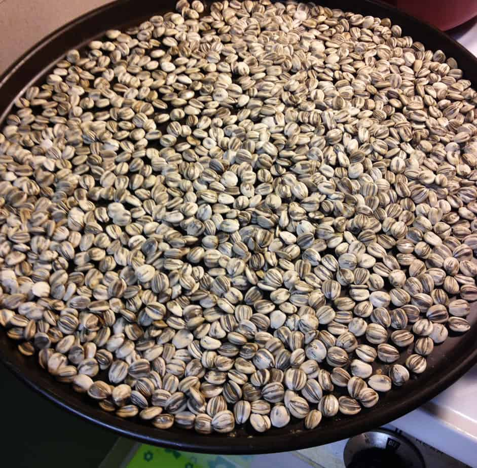 seeds-on-cookie-sheet