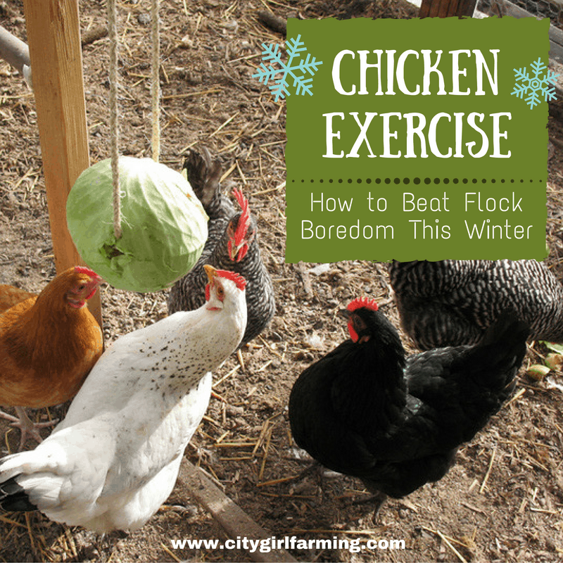 chicken-exercise-banner