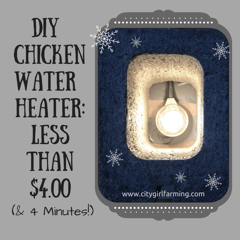 Diy Chicken Water Heater Less Than Four Minutes And Four Dollars