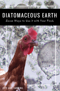 What is Diatomaceous Earth? (And Seven Reasons to Use It)