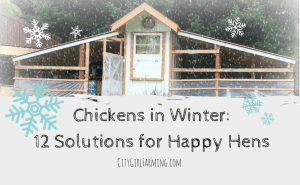 Chickens in Winter: 12 Easy Solutions for Happier Hens