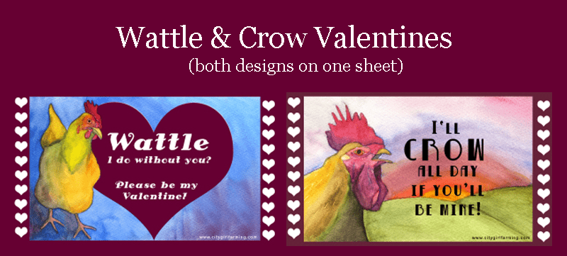 Wattle-Crow-Valentine-Banner