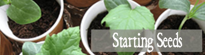 Starting-seeds-800