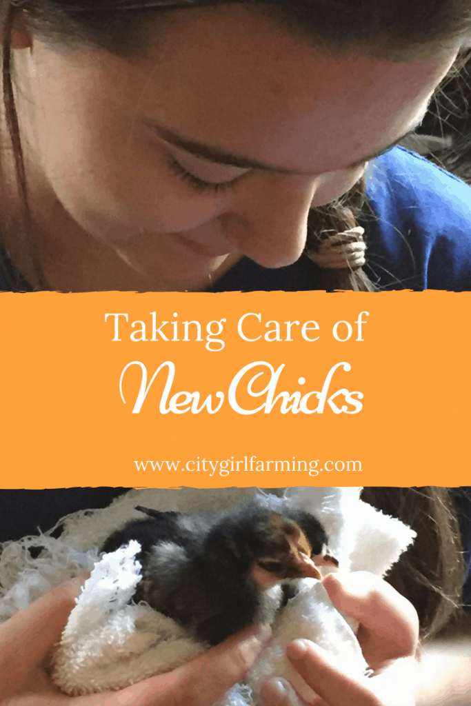 taking care of new chicks. What you need to know to get off to the best start.