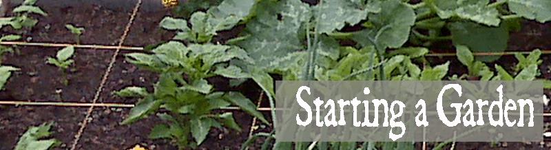starting-a-garden-800