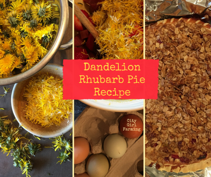 dandelion rhubarb pie is the perfect way to celebrate spring! This pie is part custard, part fruit crisp and part fruit pie. It's also 100% wonderful.