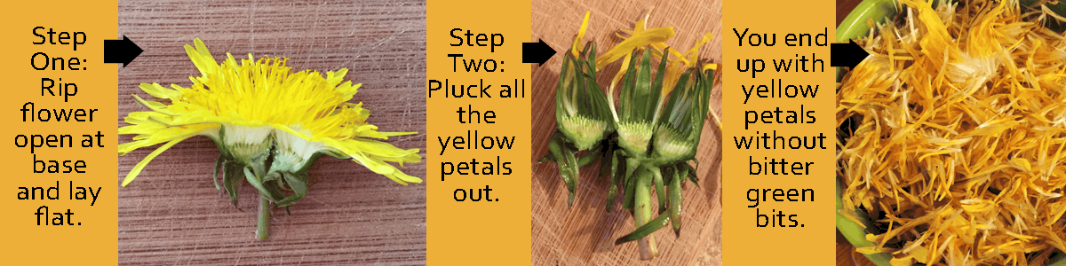 How-to-Pluck-dandelions