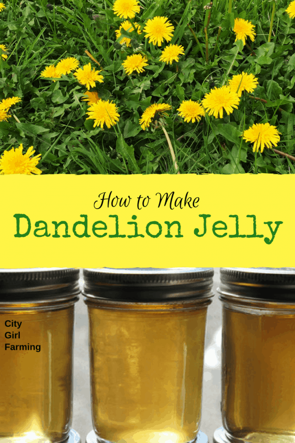Ever wondered how to make dandelion jelly? Ever heard of it? It's a lovely yellow, very tasty jelly you make from dandelions! Try it!