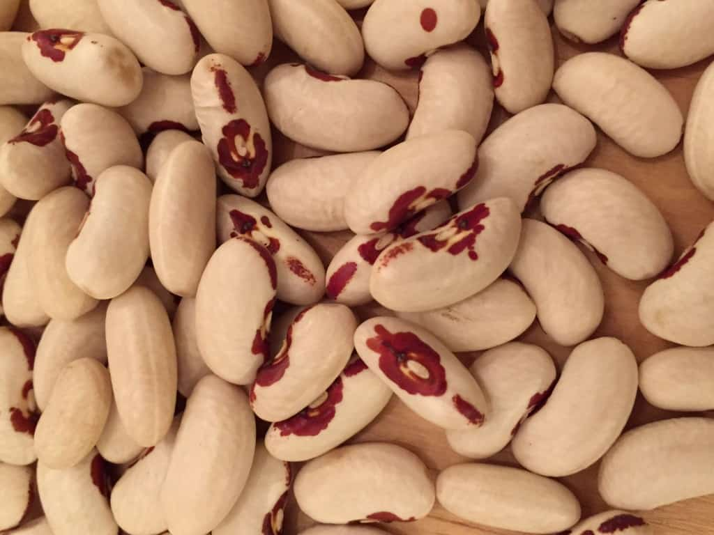 Spirit in the Red Eye Heirloom Bean