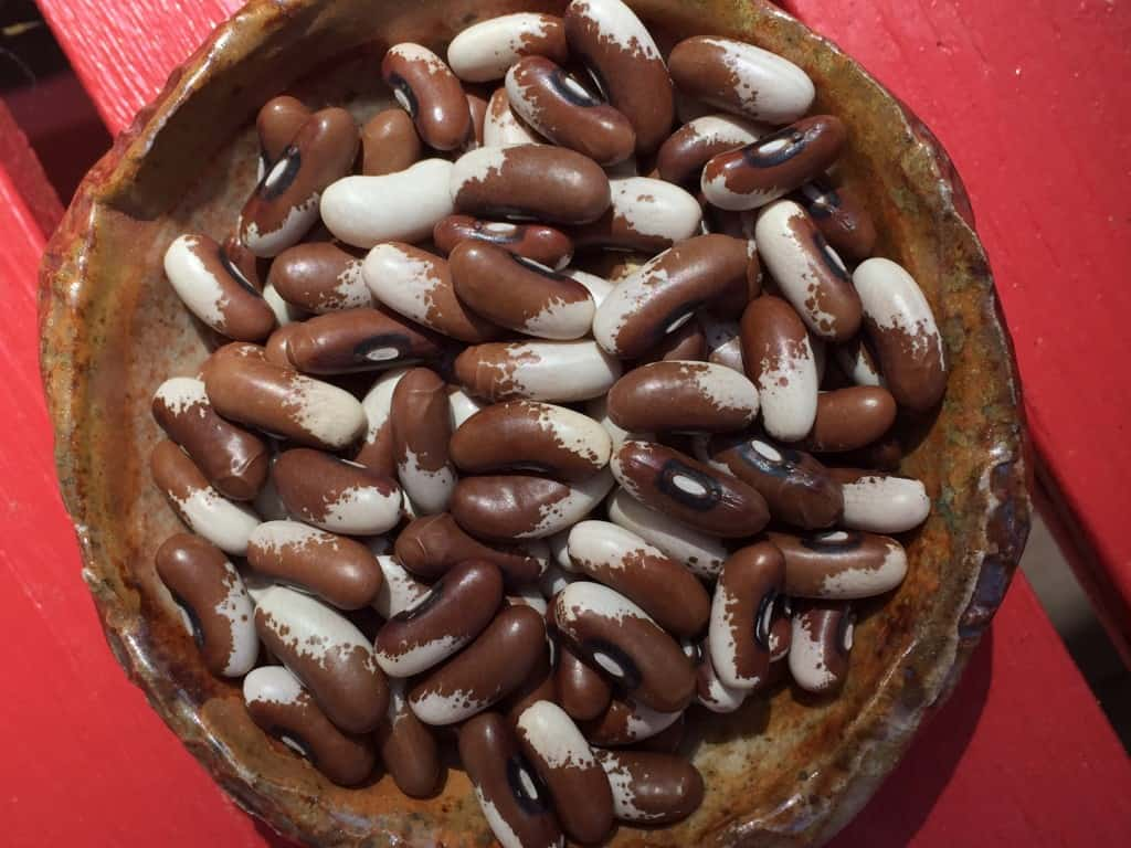 painted pony heirloom beans