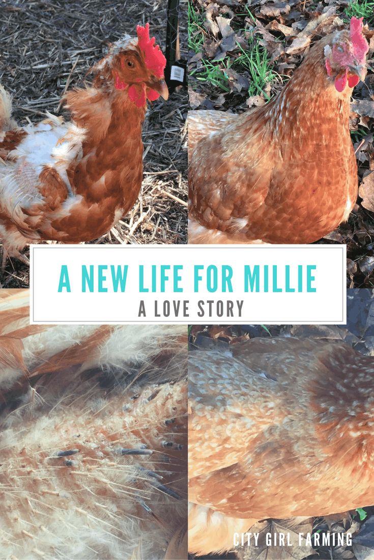a-new-life-for-millie
