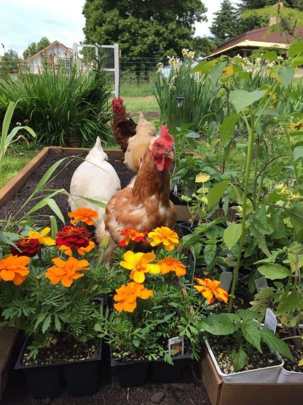 Millie-in-garden