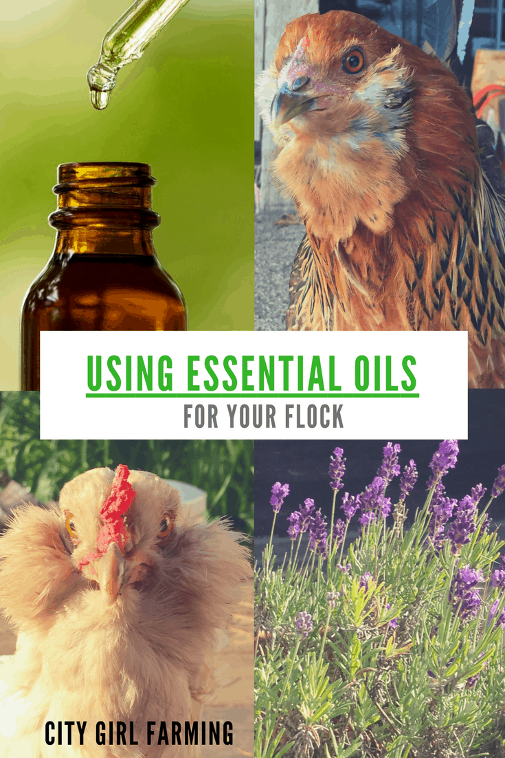 Using Essential Oils on Your Flock