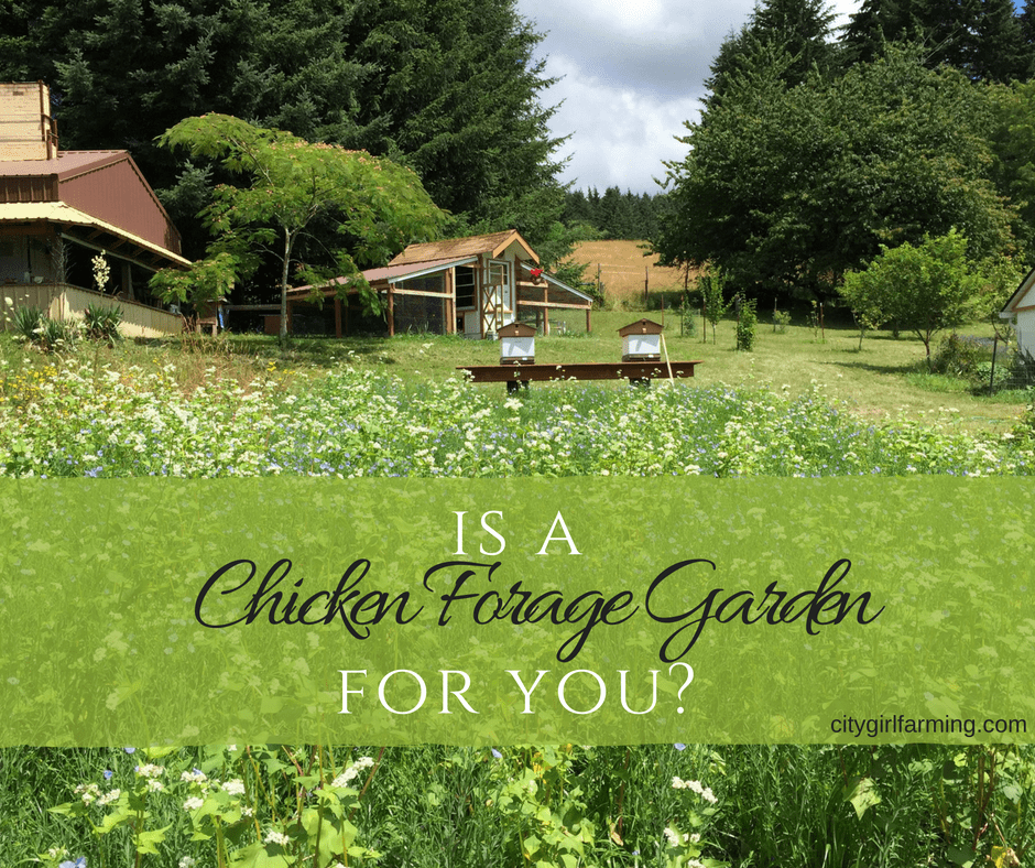 Chicken Foraging Garden?