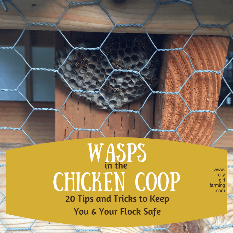 Wasps in the Chicken Coop: 20 Tips and Tricks to Keep You and Your Flock Safe