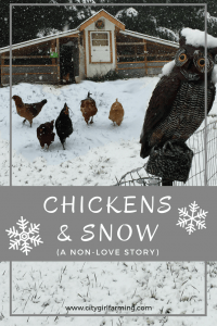 Chickens and Snow