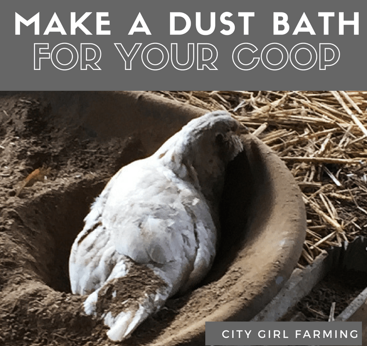 Dust bath Small