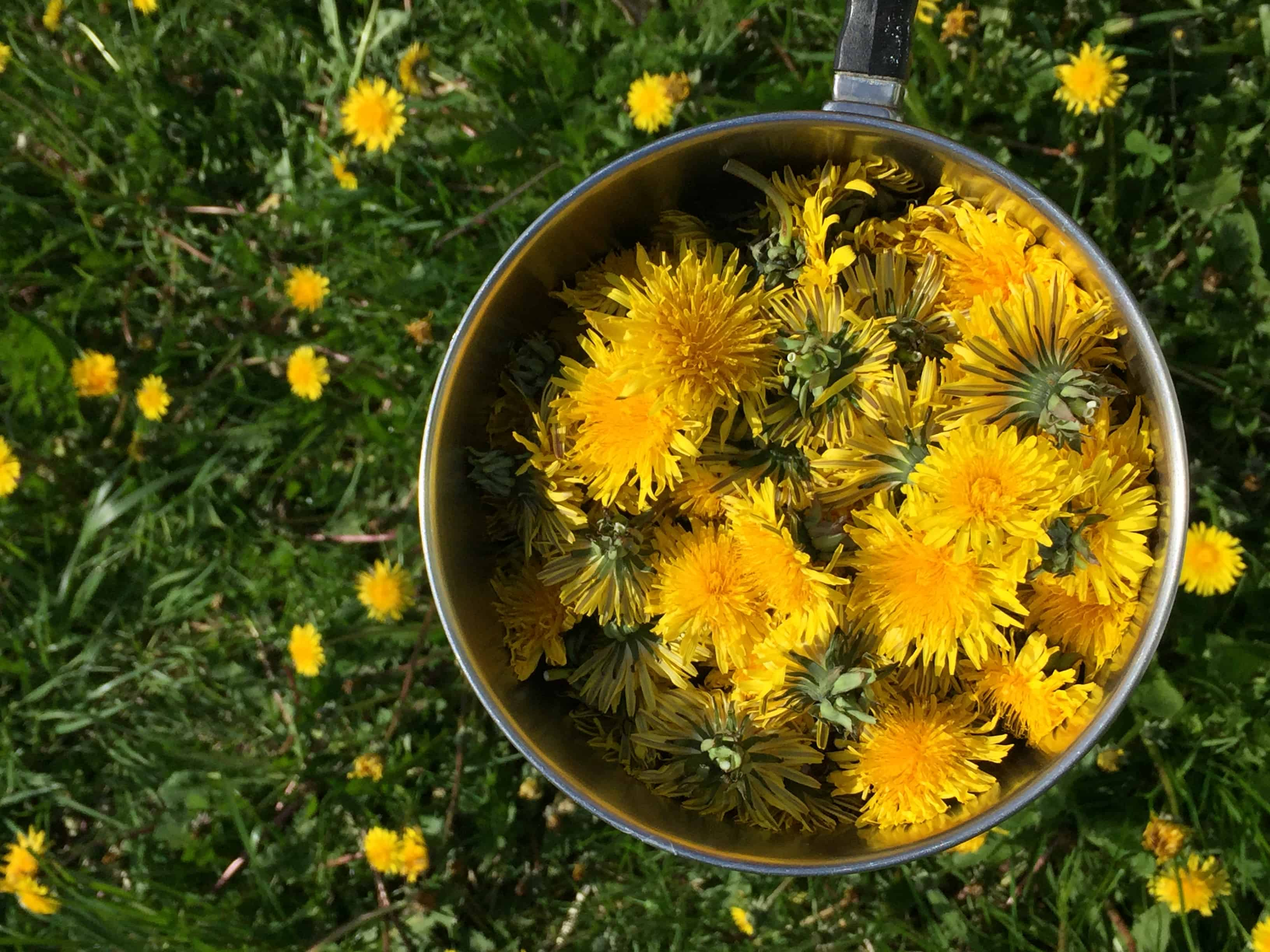 how to make dandelion salve with essential oils