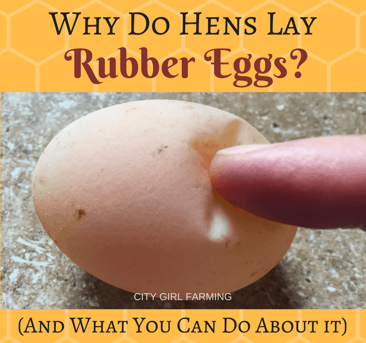 Why Do Hens Lay-2
