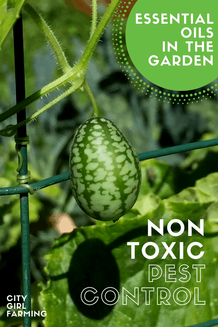 In the Garden: Non-Toxic Pest Control with Essential Oils