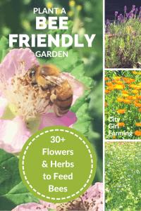 Planting a Bee Friendly Garden
