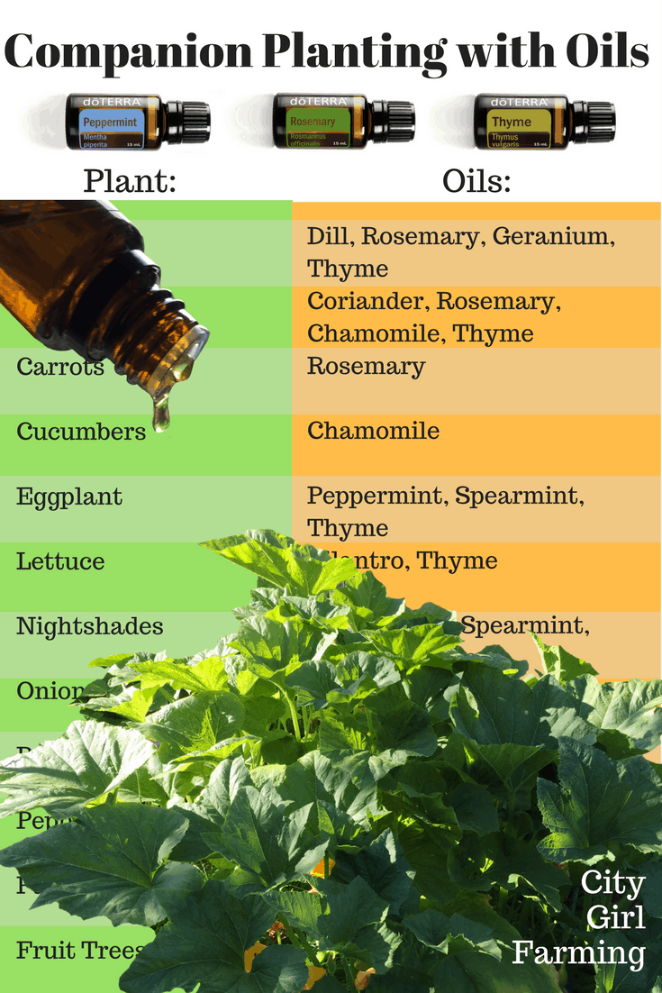 Companion 'planting' with essential oils offers all the benefits of the companion plant without having to plant them!