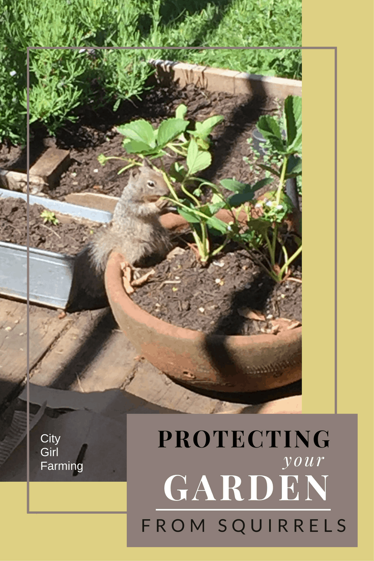 How to Protect Your Garden from Squirrels - CITY GIRL FARMING