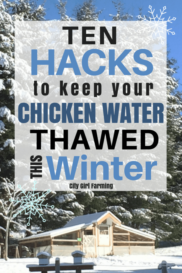 Here's 10 different ideas to help keep your chicken water thawed this winter--including ideas that don't require electricity