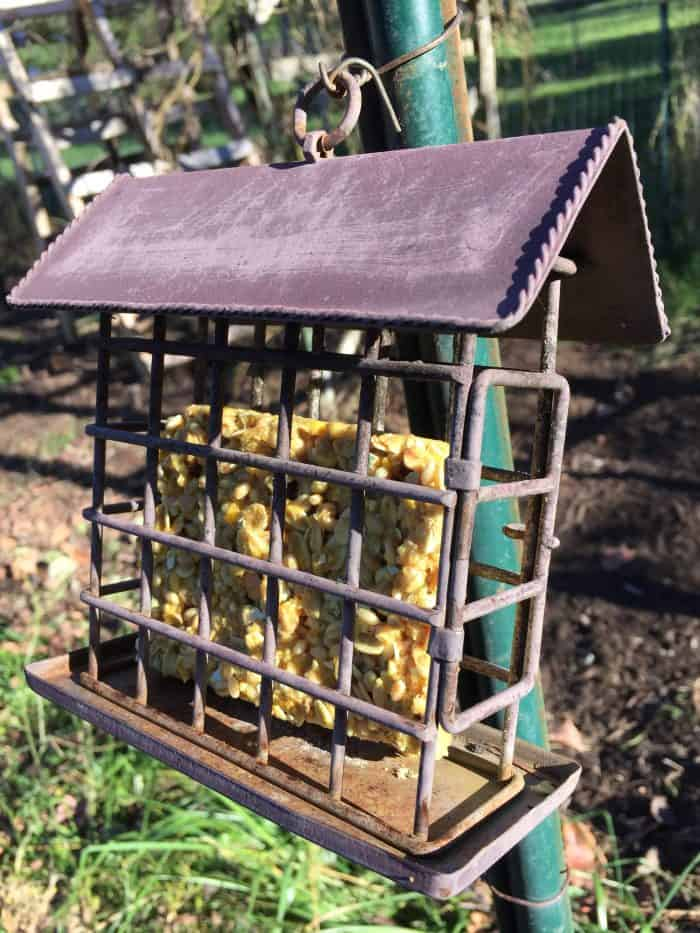 Make your own suet cakes for your chickens (and wild birds) this winter. It will help keep them healthy and warm and even help boost their egg production! They're easy to make and don't require any special ingredients!