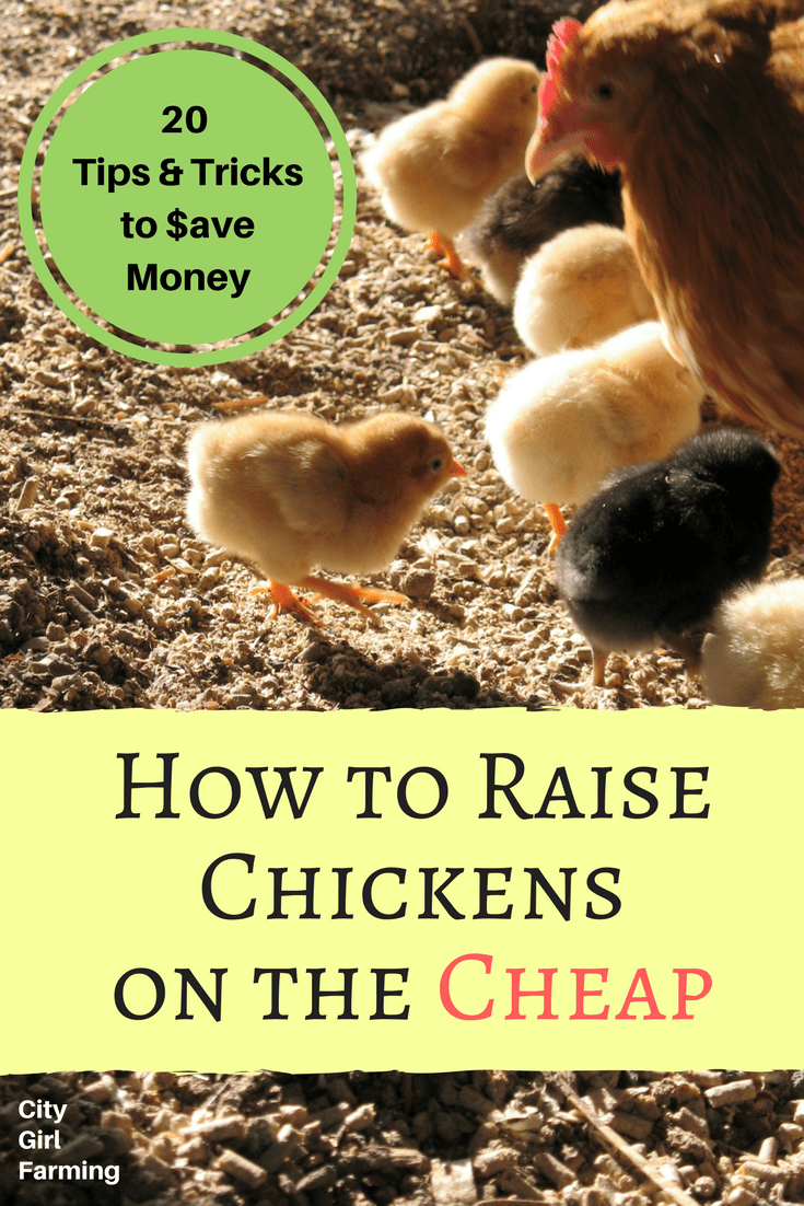 Those backyard eggs don't have to cost you an arm and leg! Here's 20 tips and ideas to save you money on your chicken costs.