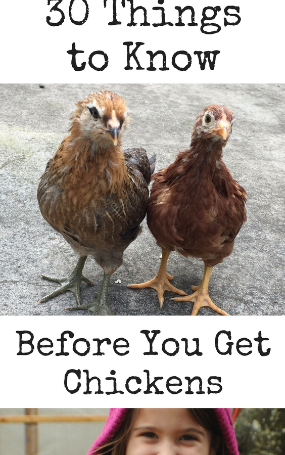 30 things you should know about getting chickens....know what you're getting into before you make the commitment of raising chickens.