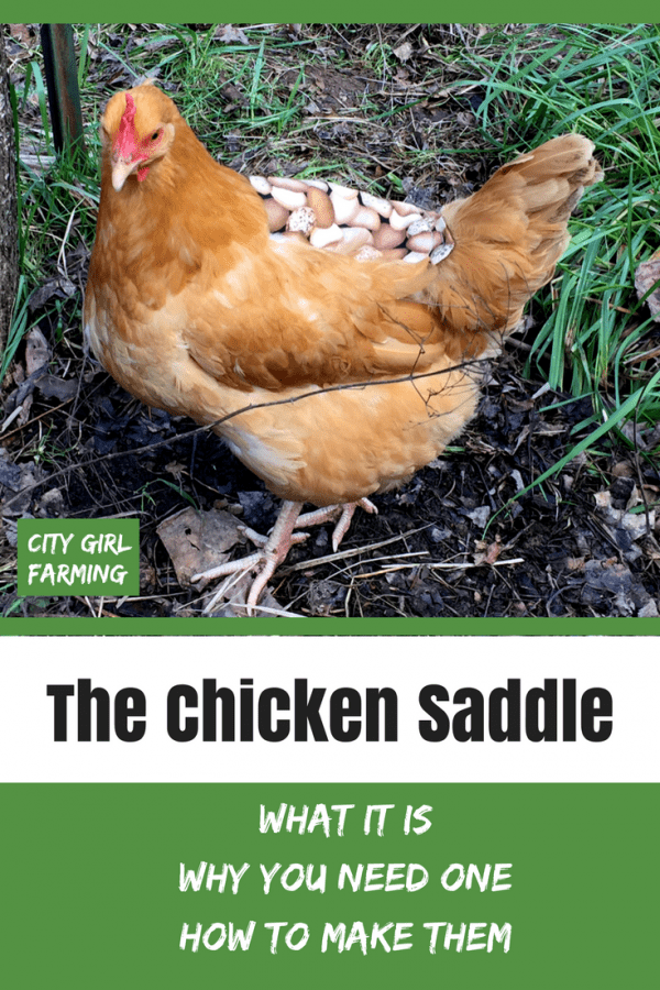 A chicken saddle is a good thing to keep on hand if you have a flock of chickens. They're handy to have around for more than one chicken problem. They're also easy to make (or inexpensive to buy) and could possibly even save the life of one of your hens.