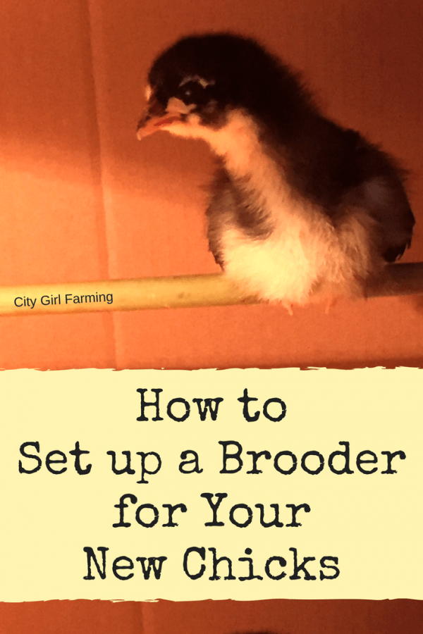 Preparation of a Brooder (for Your New Baby Chicks)