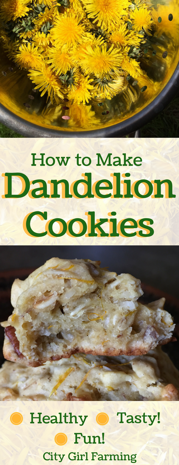 Why would you want to know how to make dandelion cookies with essential oils? For one, they're tasty! They're also easy to make and have some great health benefits to boot.
