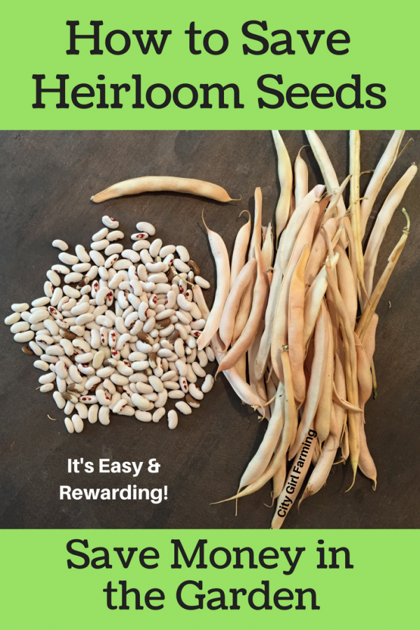 Why You Should Be Saving Your Heirloom Seeds